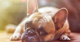 Babyphone für Hunde